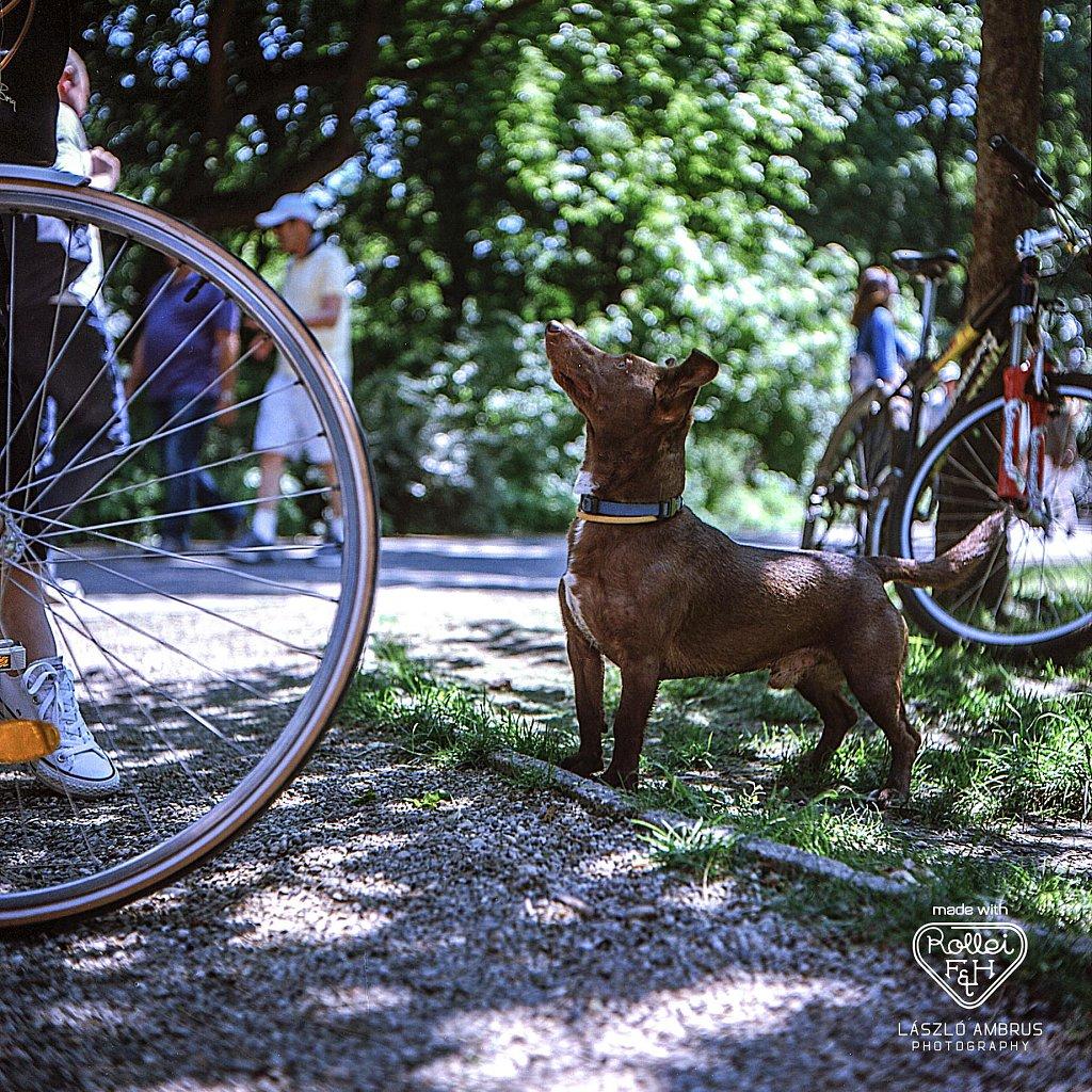 Kutya-magassagban-Rolleiflex-Margitsziget.jpg